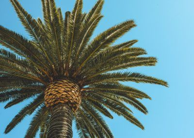 Protección de las palmeras