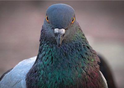Exclusión de aves